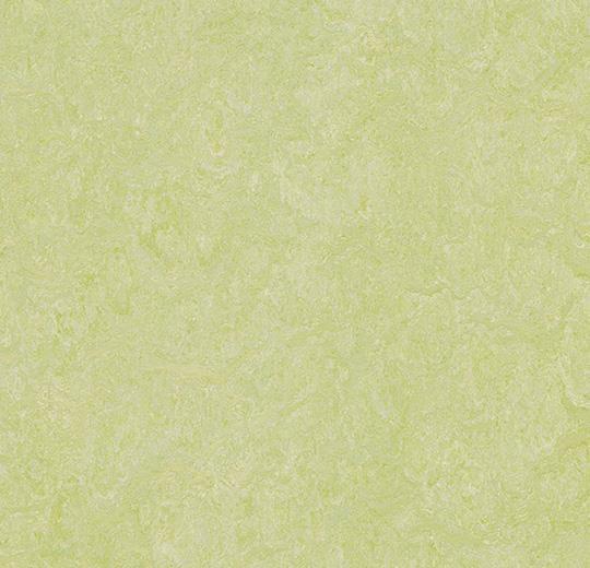 Linoleum Forbo Marmoleum Real 2.5mm - Farbe: 3881 green wellness auf DeinBoden24.de